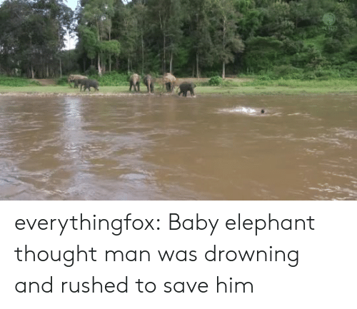 Elephant: everythingfox:  Baby elephant thought man was drowning and rushed to save him