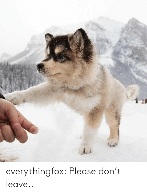 don't leave: everythingfox:    Please don't leave..