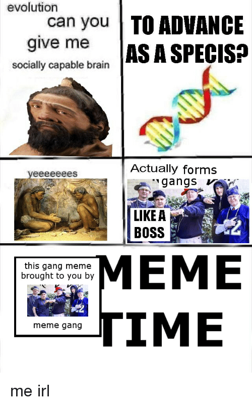 Boss Meme: evolution  can you TO ADVANCE  give me AS A SPECIS:?  socially capable brain  Actually forms  gangs  LIKE A  BOSS  MEME  TIME  this gang meme  brought to you by  meme gang