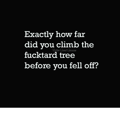 Bitties: Exactly how far  did you climb the  Bitty Sweet  fucktard tree  before you fell off?