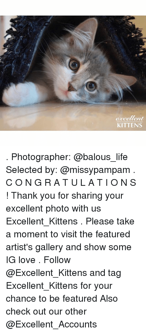 Life, Love, and Memes: excellent  KITTENS . Photographer: @balous_life Selected by: @missypampam . C O N G R A T U L A T I O N S ! Thank you for sharing your excellent photo with us Excellent_Kittens . Please take a moment to visit the featured artist's gallery and show some IG love . Follow @Excellent_Kittens and tag Excellent_Kittens for your chance to be featured Also check out our other @Excellent_Accounts