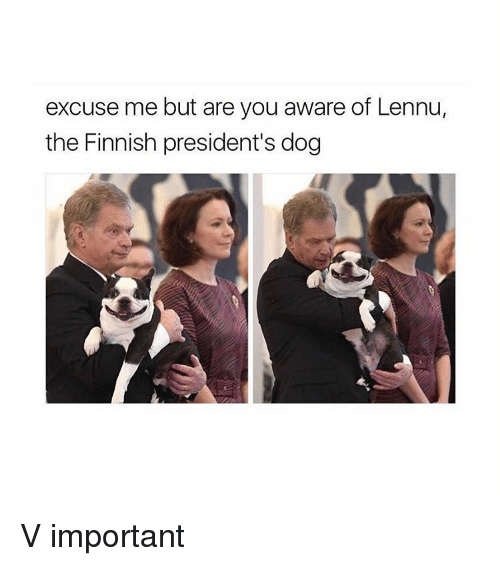 Girl, Dog, and President: excuse me but are you aware of Lennu,  the Finnish president's dog V important
