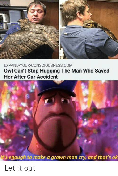 hugging: EXPAND-YOUR-CONSCIOUSNESS.COM  Owl Can't Stop Hugging The Man Who Saved  Her After Car Accident  t's enough to make a grown man cry, and that's ok Let it out