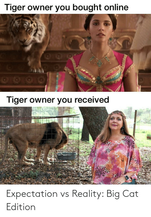 Reality: Expectation vs Reality: Big Cat Edition