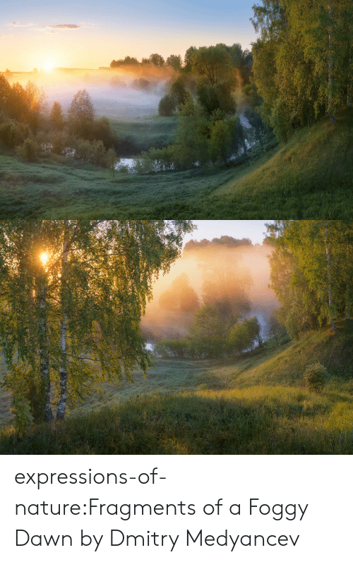 Expressions: expressions-of-nature:Fragments of a Foggy Dawn by Dmitry Medyancev