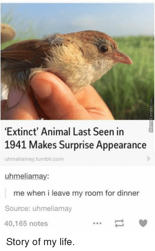 Memes, 🤖, and Extinction: 'Extinct' Animal Last Seen in  1941 Makes Surprise Appearance  uhmeliamay.tumblr.com  uhmeliamay:  me when i leave my room for dinner  Source: uhmeliamay  40,165 notes Story of my life.
