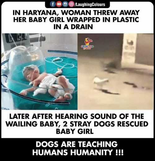 Baby Girl: f /LaughingColours  IN HARYANA, WOMAN THREW AWAY  HER BABY GIRL WRAPPED IN PLASTIC  IN A DRAIN  LAUONING  DRAIN  LATER AFTER HEARING SOUND OF THE  WAILING BABY, 2 STRAY DOGS RESCUED  BABY GIRL  DOGS ARE TEACHING  HUMANS HUMANITY!!!