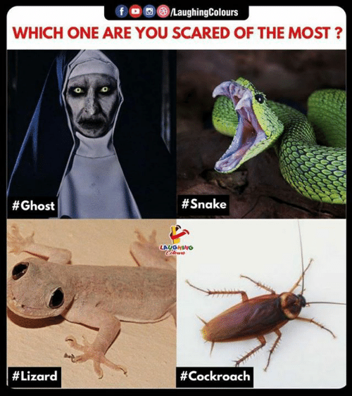 cockroach: f /LaughingColours  WHICH ONE ARE YOU SCARED OF THE MOST?  0  # Ghost  # Snake  LAUGHING  # Lizard  # Cockroach