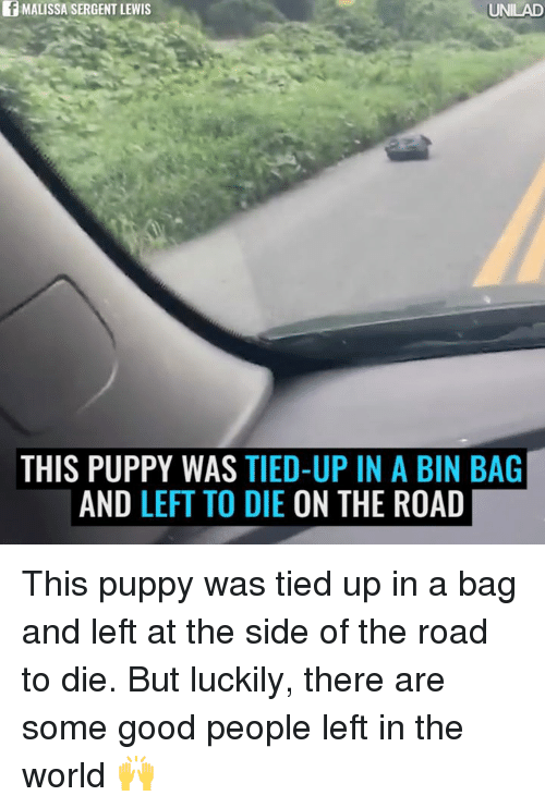 Dank, Puppies, and Good: f MALISSA SERGENT LEWIS  UNILAD  THIS PUPPY WAS TIED-UP IN A BIN BAG  AND LEFT TO DIE  ON THE ROAD This puppy was tied up in a bag and left at the side of the road to die. But luckily, there are some good people left in the world 🙌