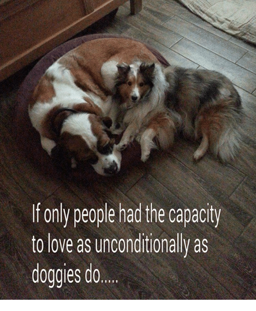 Memes and 🤖: f only people had the capacity  to love as unconditionally as  doggies do...
