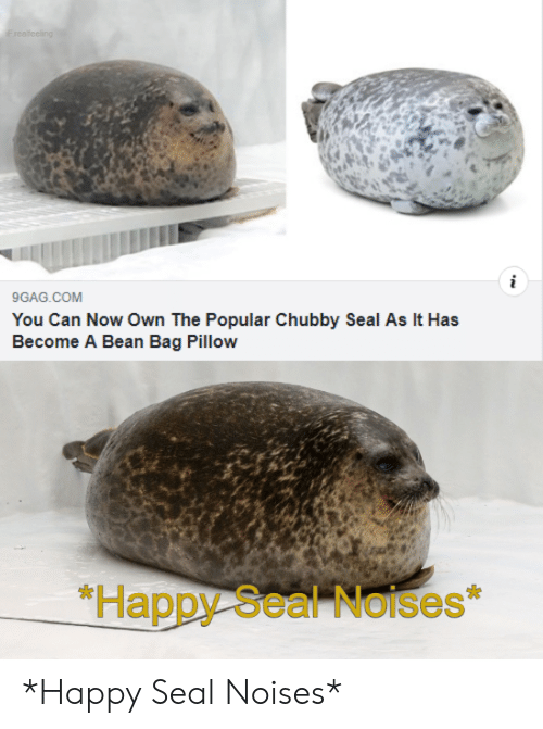 chubby: F realfeeling  i  9GAG.COM  You Can Now Own The Popular Chubby Seal As It Has  Become A Bean Bag Pillow  *Happy Seal Noises *Happy Seal Noises*