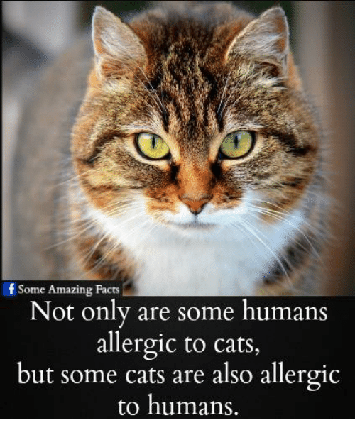 Amazing Cat: 25+ Best Memes About Cats Are