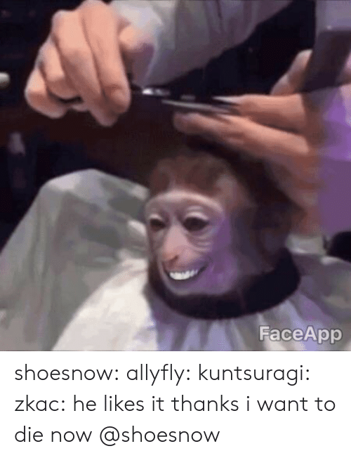 Faceapp: FaceApp shoesnow:  allyfly: kuntsuragi:  zkac: he likes it thanks i want to die now   @shoesnow