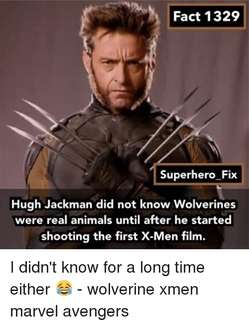 X-Men (Film): Fact 1329  Superhero Fix  Hugh Jackman did not know Wolverines  were animals until after he started  shooting the first X-Men film. I didn't know for a long time either 😂 - wolverine xmen marvel avengers
