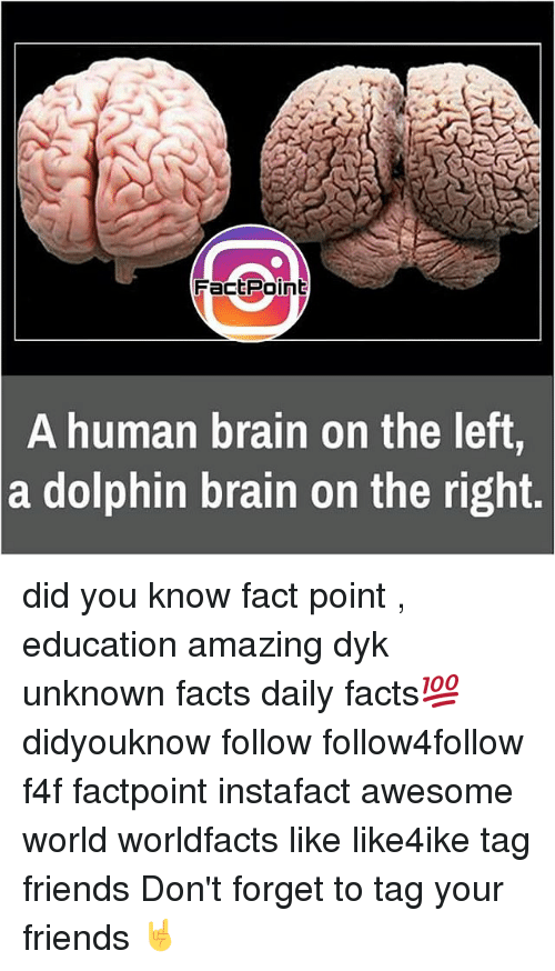Memes, Dolphin, and Dolphins: Fact Point  A human brain on the left  a dolphin brain on the right. did you know fact point , education amazing dyk unknown facts daily facts💯 didyouknow follow follow4follow f4f factpoint instafact awesome world worldfacts like like4ike tag friends Don't forget to tag your friends 🤘