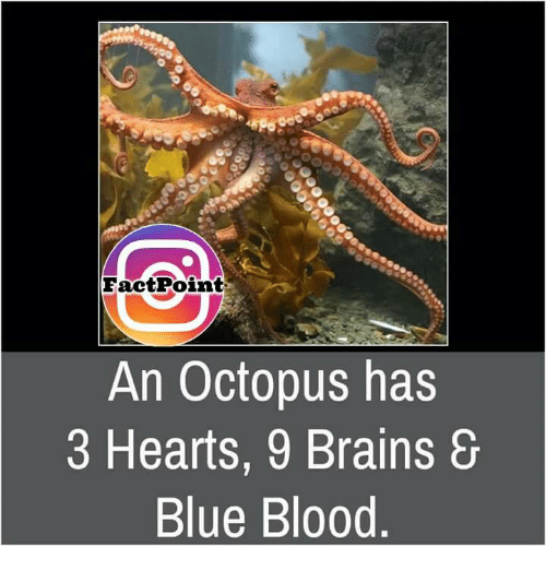 blue blood: Fact Point  An Octopus has  3 Hearts, 9 Brains  Blue Blood