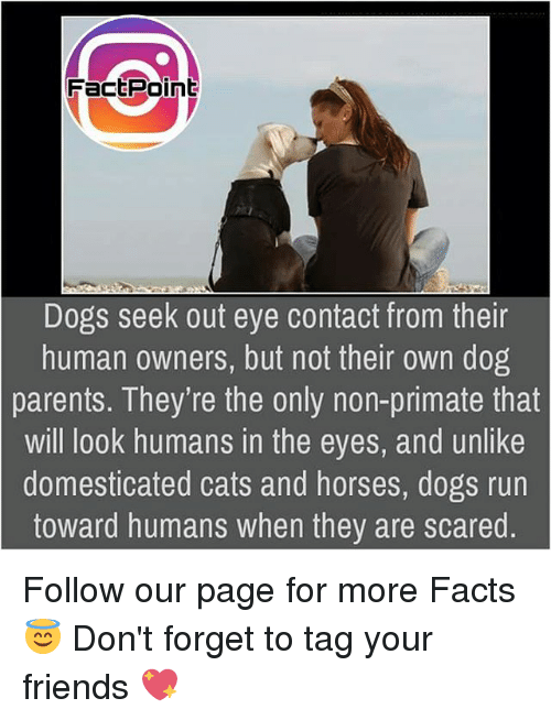 Cats, Dogs, and Facts: Fact Point  Dogs seek out eye contact from their  human owners, but not their own dog  parents. They're the only non-primate that  Will look humans in the eyes, and unlike  domesticated cats and horses, dogs run  toward humans when they are scared Follow our page for more Facts 😇 Don't forget to tag your friends 💖