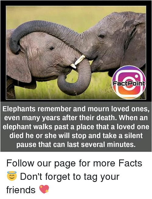 pause: Fact Point  Elephants remember and mourn loved ones,  even many years after their death. When an  elephant walks past a place that a loved one  died he or she will stop and take a silent  pause that can last several minutes. Follow our page for more Facts 😇 Don't forget to tag your friends 💖
