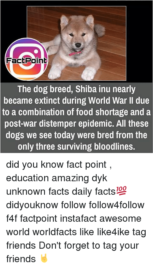 Memes, 🤖, and Dog Breeds: Fact Point  The dog breed, Shiba inu nearly  became extinct during World War II due  to a combination of food shortage and a  post-war distemper epidemic. All these  dogs we see today were bred from the  only three surviving bloodlines. did you know fact point , education amazing dyk unknown facts daily facts💯 didyouknow follow follow4follow f4f factpoint instafact awesome world worldfacts like like4ike tag friends Don't forget to tag your friends 🤘