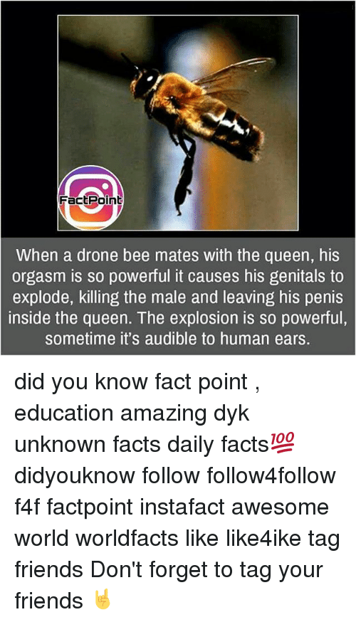 Drone, Facts, and Friends: Fact Point  When a drone bee mates with the queen, his  orgasm is so powerful it causes his genitals to  explode, killing the male and leaving his penis  inside the queen. The explosion is so powerful,  sometime it's audible to human ears. did you know fact point , education amazing dyk unknown facts daily facts💯 didyouknow follow follow4follow f4f factpoint instafact awesome world worldfacts like like4ike tag friends Don't forget to tag your friends 🤘