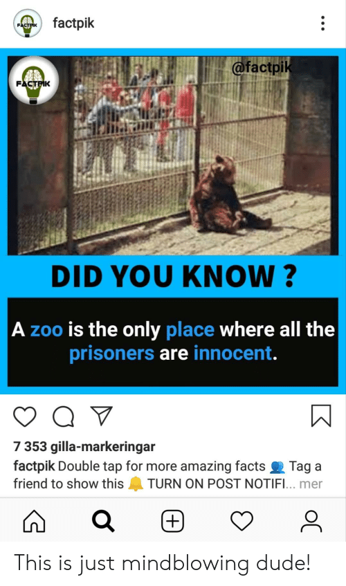 amazing facts: factpik  FACTPIK  @factpik  FACTFIK  DID YOU KNOW?   A zoo is the only place where all the  prisoners are innocent.  7 353 gilla-markeringar  factpik Double tap for more amazing facts  Tag a  friend to show this  TURN ON POST NOTIFI... mer  +)  K  D This is just mindblowing dude!