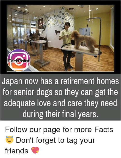 Retirement Homes For Dogs Japan