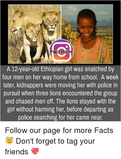 Ethiopians: FactPoint  A 12-year-old Ethiopian girl was snatched by  four men on her way home from school. A week  later, kidnappers were moving her with police in  pursuit when three lions encountered the group  and chased men off. The lions stayed with the  girl without harming her, before departing as  police searching for her came near Follow our page for more Facts 😇 Don't forget to tag your friends 💖