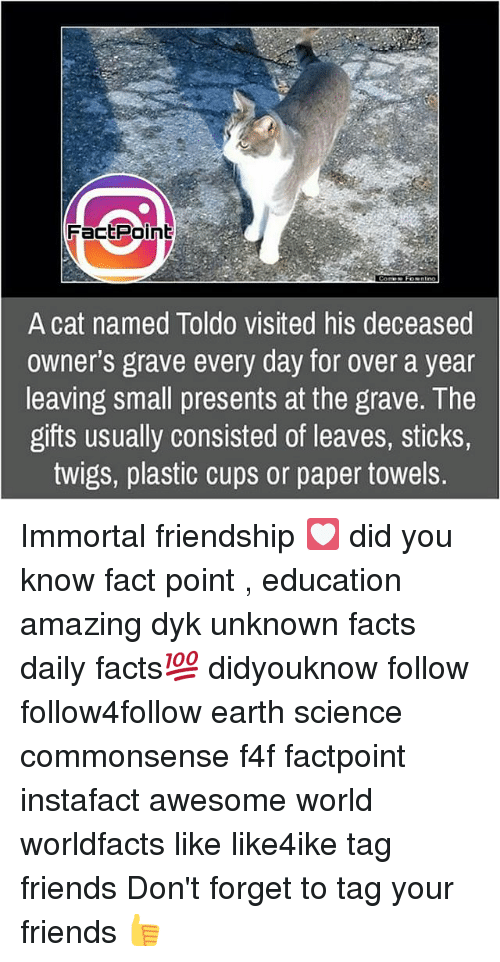 Facts, Friends, and Memes: FactPoint  Comes Foentno  A cat named Toldo visited his deceased  owner's grave every day for over a year  leaving small presents at the grave. The  gifts usually consisted of leaves, sticks,  twigs, plastic cups or paper towels. Immortal friendship 💟 did you know fact point , education amazing dyk unknown facts daily facts💯 didyouknow follow follow4follow earth science commonsense f4f factpoint instafact awesome world worldfacts like like4ike tag friends Don't forget to tag your friends 👍