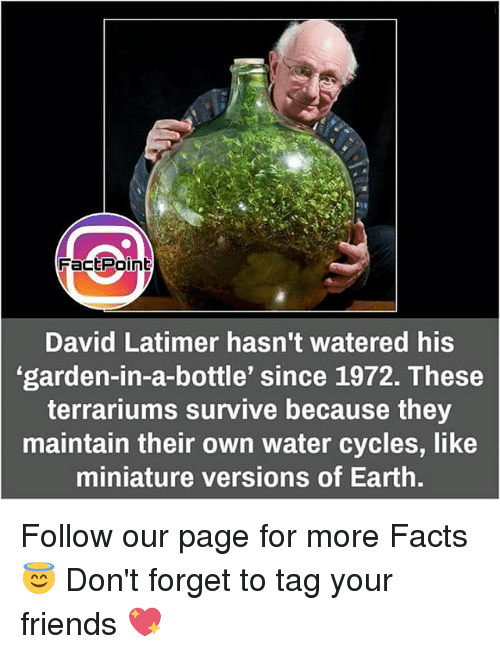 Facts, Memes, and Earth: FactPoint  David Latimer hasn't watered his  'garden-in-a-bottle' since 1972. These  terrariums survive because they  maintain their own water cycles, like  miniature versions of Earth. Follow our page for more Facts 😇 Don't forget to tag your friends 💖