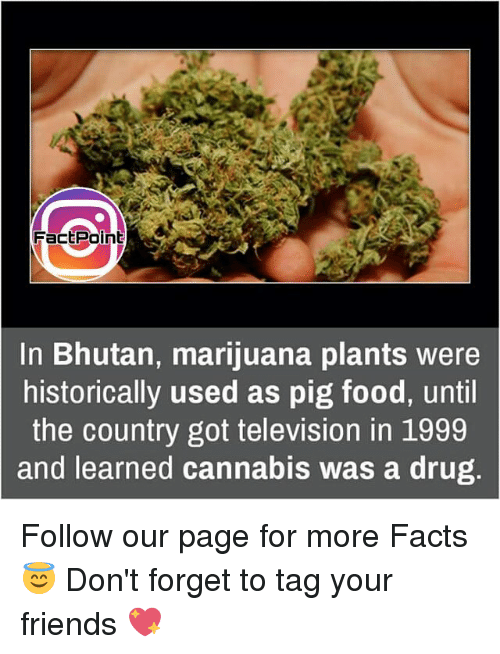Bhutan: FactPoint  In Bhutan, marijuana plants were  historically used as pig food, until  the country got television in 1999  and learned cannabis was a drug Follow our page for more Facts 😇 Don't forget to tag your friends 💖