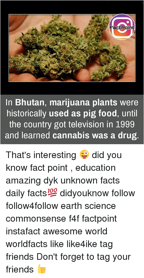 Pigly: FactPoint  In Bhutan, marijuana plants were  historically used as pig food, until  the country got television in 1999  and learned cannabis was a drug That's interesting 😜 did you know fact point , education amazing dyk unknown facts daily facts💯 didyouknow follow follow4follow earth science commonsense f4f factpoint instafact awesome world worldfacts like like4ike tag friends Don't forget to tag your friends 👍