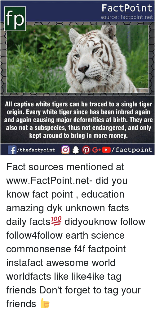 originality: FactPoint  source: factpoint.net  All captive white tigers can be traced to a single tiger  origin. Every white tiger since has been inbred again  and again causing major deformities at birth. They are  also not a subspecies, thus not endangered, and only  kept around to bring in more money. Fact sources mentioned at www.FactPoint.net- did you know fact point , education amazing dyk unknown facts daily facts💯 didyouknow follow follow4follow earth science commonsense f4f factpoint instafact awesome world worldfacts like like4ike tag friends Don't forget to tag your friends 👍