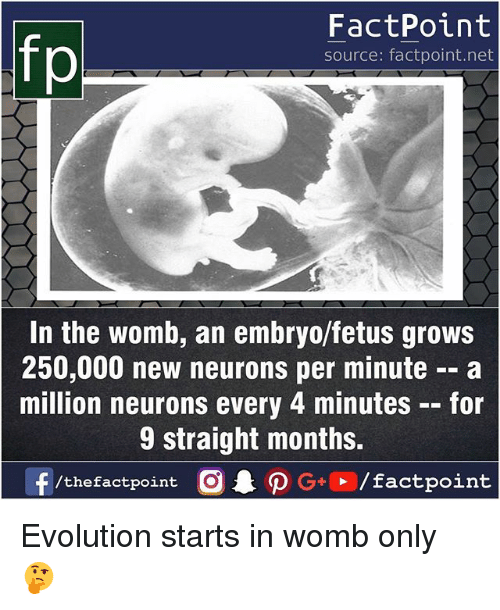oed: FactPoint  source: factpoint.net  In the womb, an embryo/fetus grows  250,000 new neurons per minute -- a  million neurons every 4 minutes-for  9 straight months.  f/thefactpoint O P G/factpoint Evolution starts in womb only 🤔
