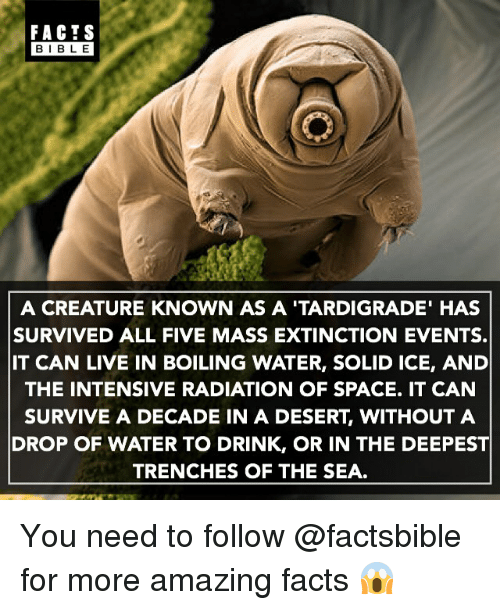 Facts, Memes, and Bible: FACTS  BIBLE  BIBLE  A CREATURE KNOWN AS A 'TARDIGRADE' HAS  SURVIVED ALL FIVE MASS EXTINCTION EVENTS.  IT CAN LIVE IN BOILING WATER, SOLID ICE, AND  THE INTENSIVE RADIATION OF SPACE. IT CAN  SURVIVE A DECADE IN A DESERT, WITHOUT A  DROP OF WATER TO DRINK, OR IN THE DEEPEST  TRENCHES OF THE SEA. You need to follow @factsbible for more amazing facts 😱
