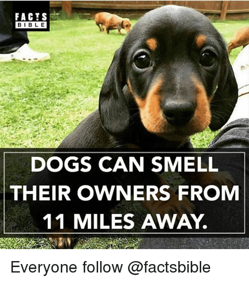 Dogs, Facts, and Memes: FACTS  BIBLE  DOGS CAN SMELL  THEIR OWNERS FROM  11 MILES AWAY. Everyone follow @factsbible