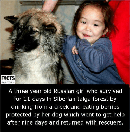 Russian Girl: FACTS  FACTORY  A three year old Russian girl who survived  for 11 days in Siberian taiga forest by  drinking from a creek and eating berries  protected by her dog which went to get help  after nine days and returned with rescuers