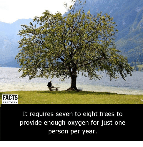 factorial: FACTS  FACTORY  It requires seven to eight trees to  provide enough oxygen for just one  person per year.
