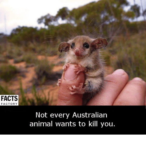 factorial: FACTS  FACTORY  Not every Australian  animal wants to kill you.