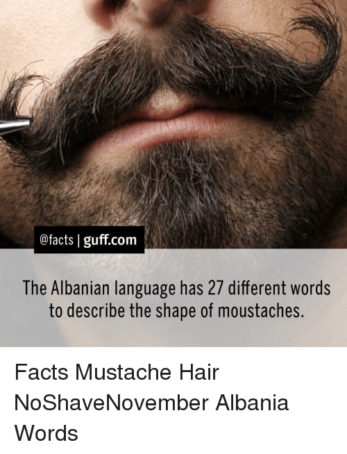 Albania: @facts I guff com  The Albanian language has 27 different words  to describe the shape of moustaches Facts Mustache Hair NoShaveNovember Albania Words