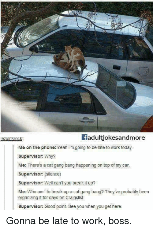 Cat Gang Bang: fadultjokesandmore  Me on the phone: Yeah Im going to be late to work today  Supervisor: Why?  Me: There's a cat gang bang happening on top of my car.  Supervisor: (silence)  Supervisor: Well can't you break it up?  Me: Who am I to break up a cat gang bang? Theyve probably been  organizing it for days on Craigslist.  Supervisor: Good point. See you when you get here. Gonna be late to work, boss.