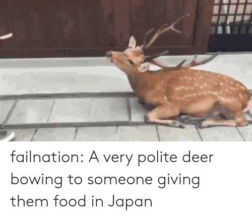 bowing: failnation:  A very polite deer bowing to someone giving them food in Japan