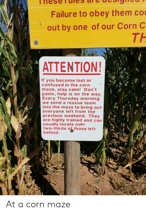 maze: Failure to obey them co  out by one of our Corn C  TH  ATTENTION!  If you become lost or  confused in the corn  maze, stay calm! Don't  panic, help is on the way  Every Thursday morning  we send a rescue team  into the maze to bring out  everyone left from the  previous weekend. They  are highly trained and can  usually locate over  two-thirds those left  behind At a corn maze