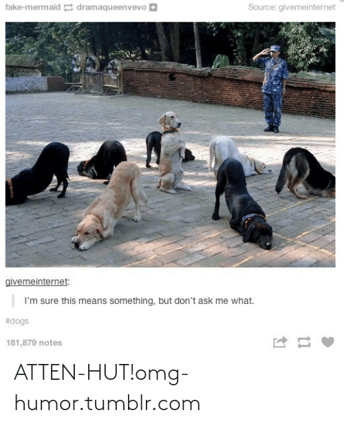 Dogs: fake-mermaid dramaqueenvevo +  Source: givemeinternet  givemeinternet:  I'm sure this means something, but don't ask me what.  #dogs  181,879 notes ATTEN-HUT!omg-humor.tumblr.com