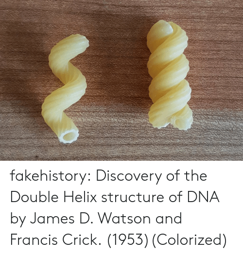 the double: fakehistory:  Discovery of the Double Helix structure of DNA by James D. Watson and Francis Crick. (1953)(Colorized)