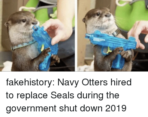 Otters, Tumblr, and Blog: fakehistory:  Navy Otters hired to replace Seals during the government shut down 2019