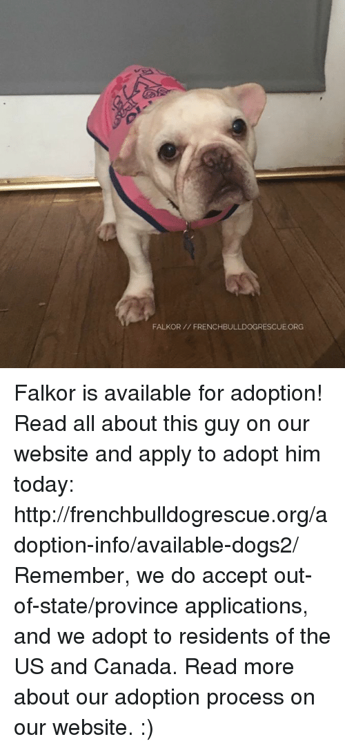 us-and-canada: FALKOR FRENCHBULLDOGRESCUE ORG Falkor is available for adoption! Read all about this guy on our website <location, likes, dislikes> and apply to adopt him today: http://frenchbulldogrescue.org/adoption-info/available-dogs2/  Remember, we do accept out-of-state/province applications, and we adopt to residents of the US and Canada. Read more about our adoption process on our website. :)