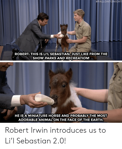 fallontonight:  #FALLONTONIGHT  ROBERT: THIS IS LI'L SEBASTIAN, JUST LIKE FROM THE  SHOW PARKS AND RECREATION!  HE IS A MINIATURE HORSE AND PROBABLY THE MOST  ADORABLE ANIMAL ON THE FACE OFTHE EARTH Robert Irwin introduces us to Li'l Sebastian 2.0!