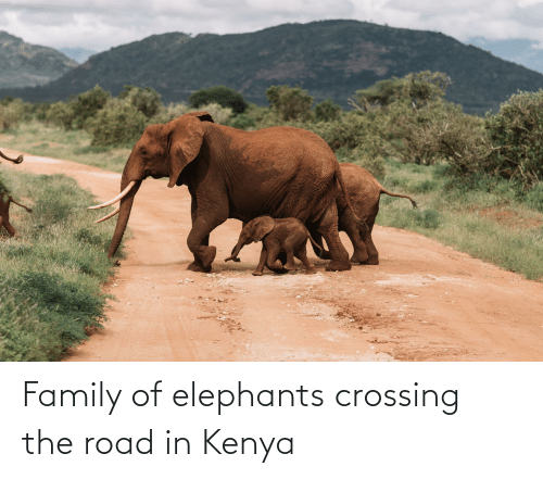 Family, Elephants, and The Road: Family of elephants crossing the road in Kenya