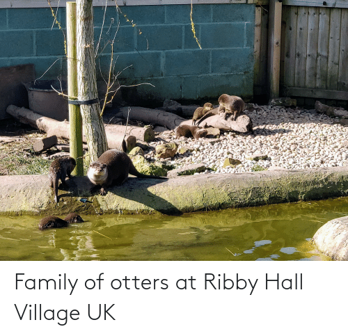 Otters: Family of otters at Ribby Hall Village UK