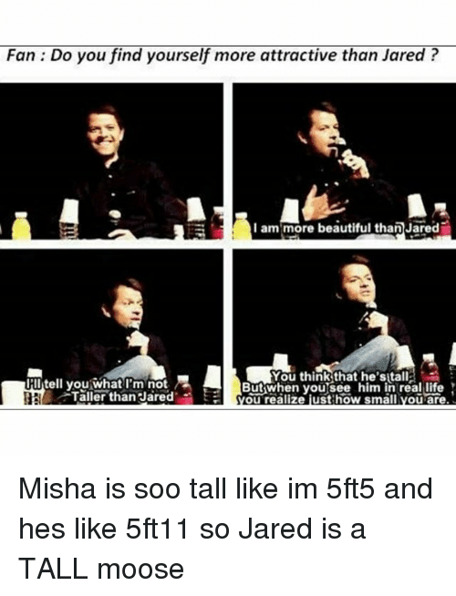 soos: Fan: Do you find yourself more attractive than Jared?  I am more beautiful than Jared  You think that he'sitall  Butwhen you see him in real life  YOu realize just how small you are  iitell you what m not  HR  Taller than Jared Misha is soo tall like im 5ft5 and hes like 5ft11 so Jared is a TALL moose